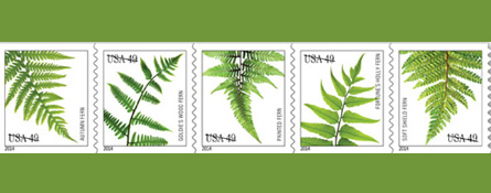 cindy dyer graphic designer garden photographer new fern stamps for post office