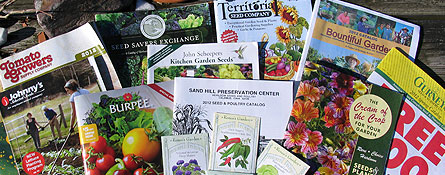 what are heirloom seeds open-pollinated seeds hybrid organic GMO seeds