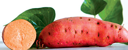 difference between sweet potatoes and yams how to grow and cure sweet potatoes southern exposure seed exchange